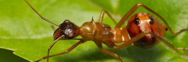 ant_slide2